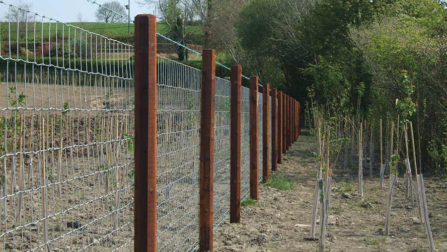 Creosote fencing posts and fence