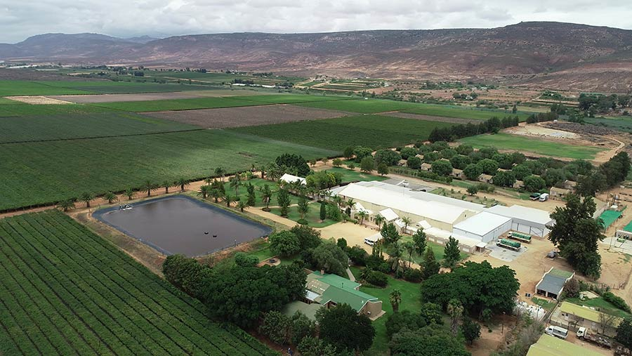 This table grape farm in Western Cape, South Africa, has an asking price of about £4m © Knight Frank
