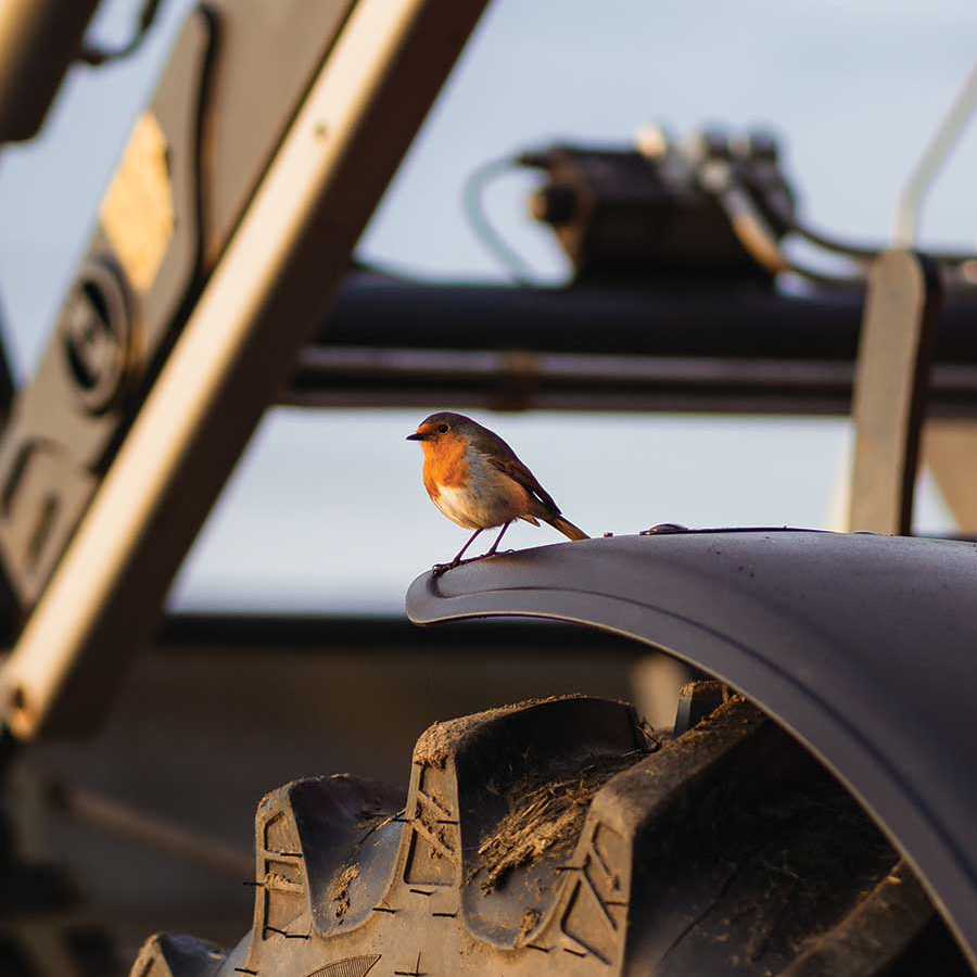 Singing robin © Lorna McNiven