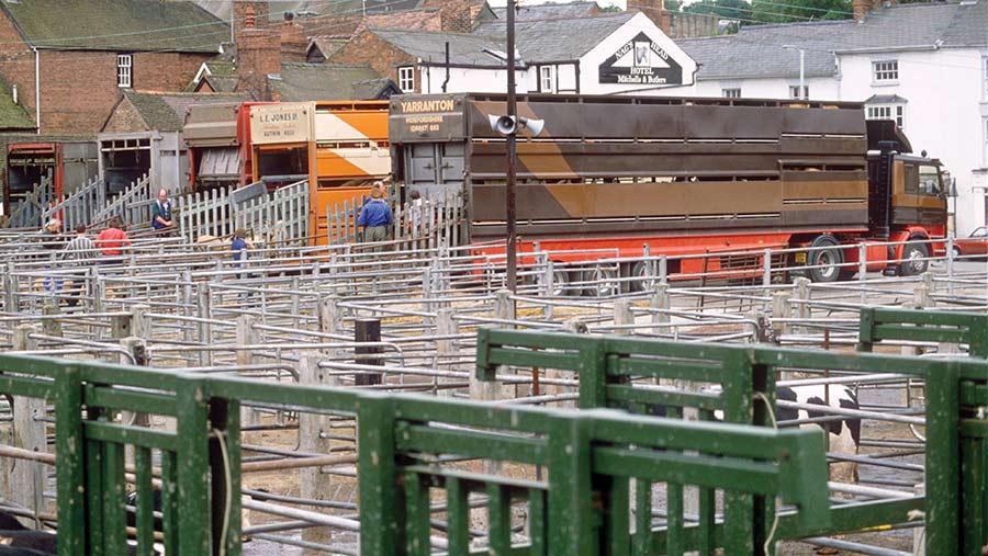 Ludlow cattle market