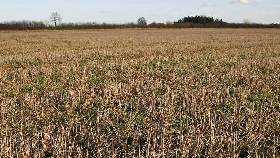 Field with overwintered stubble