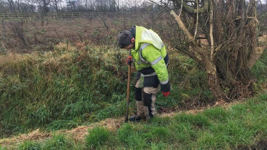 Man planting hedges