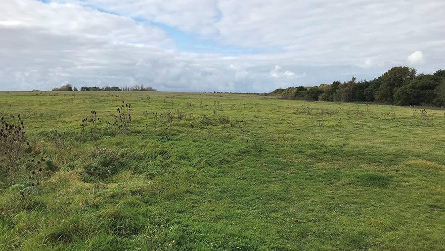 Land at Hatfield