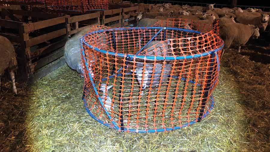 Lambing ring