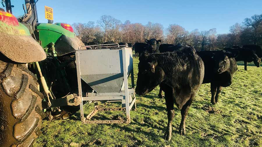 Cattle feeder