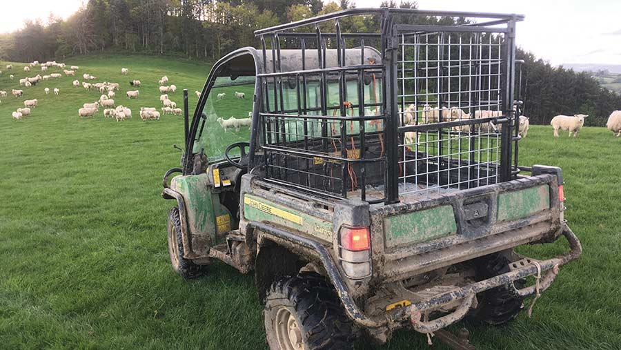 IBC Gator cage