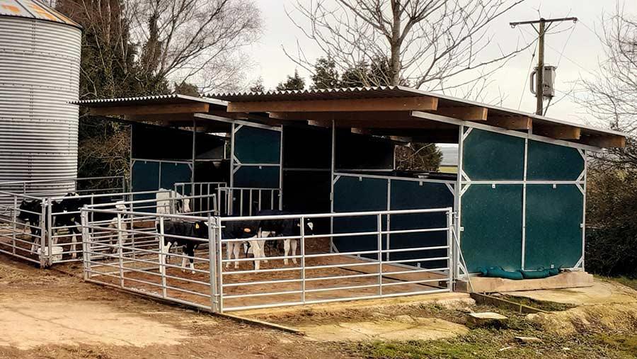 Calf accommodation