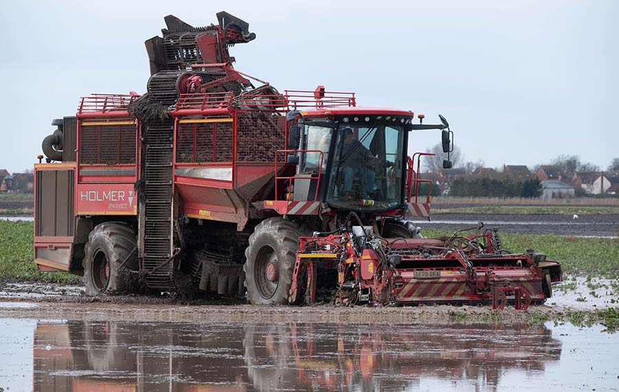 Beet harvesting in a flooded field
