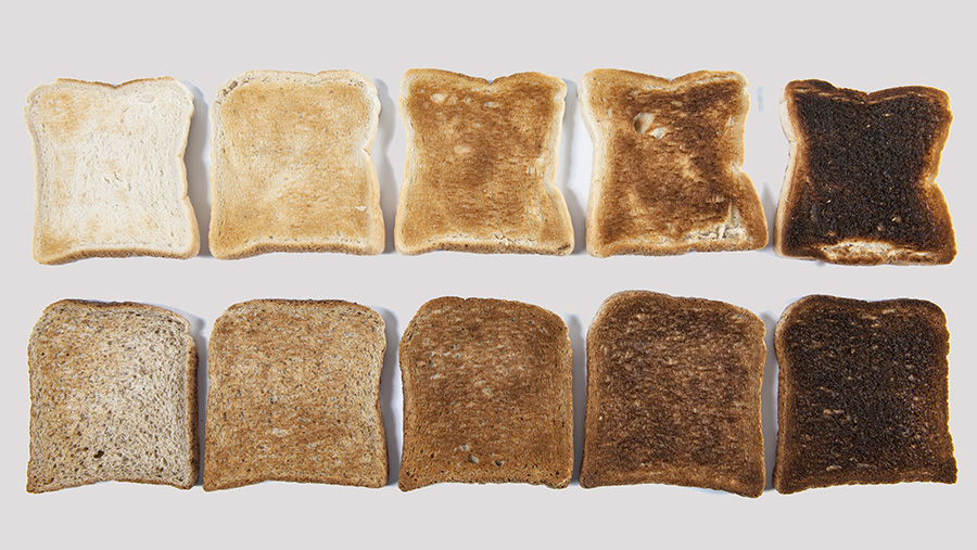 Toasted slices of bread