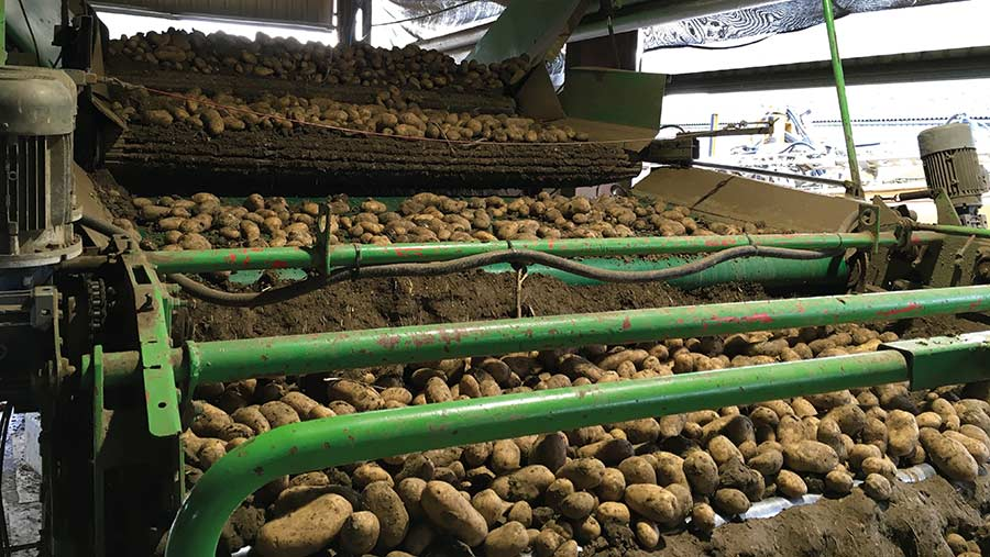 Miedema potato grader