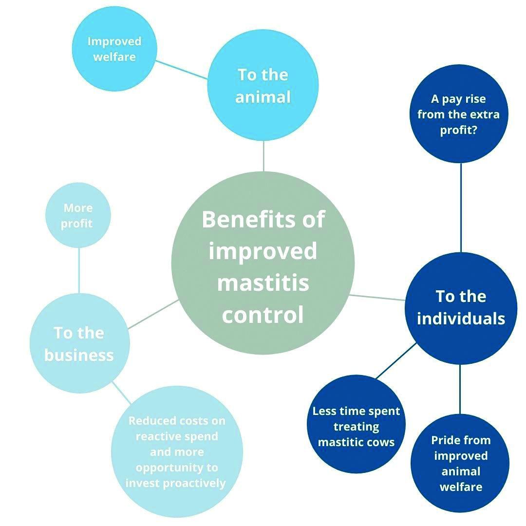 Mastitis benefits visualised