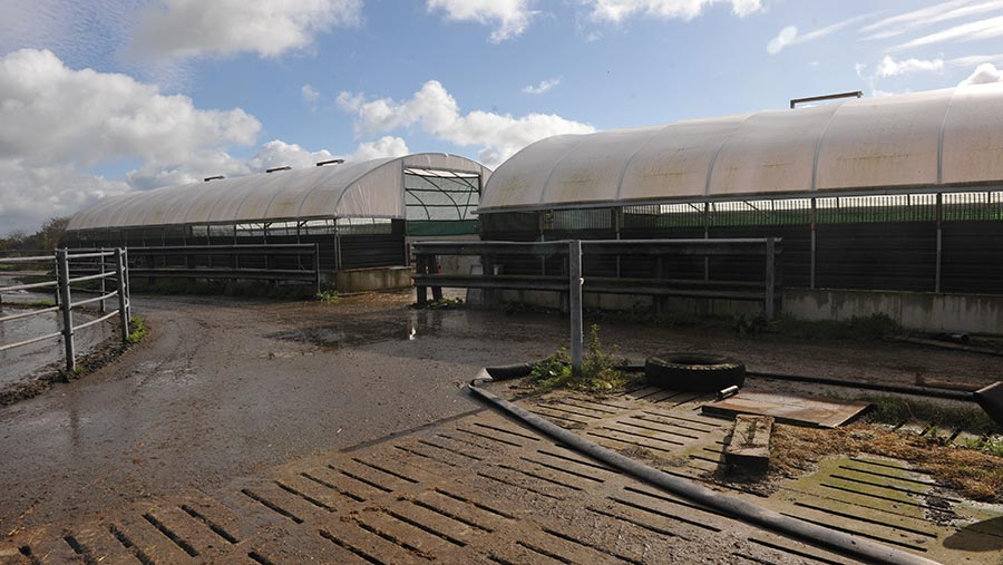 The twin polytunnels exterior