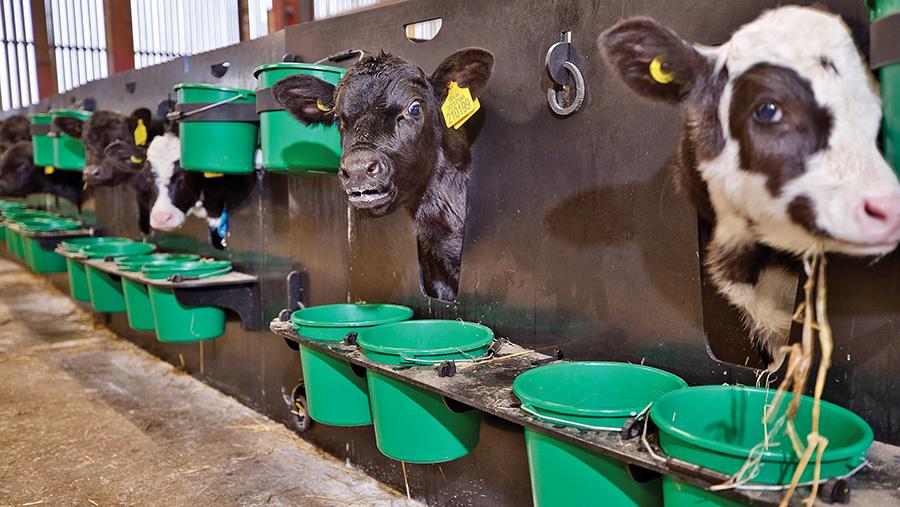Individual calf hutches