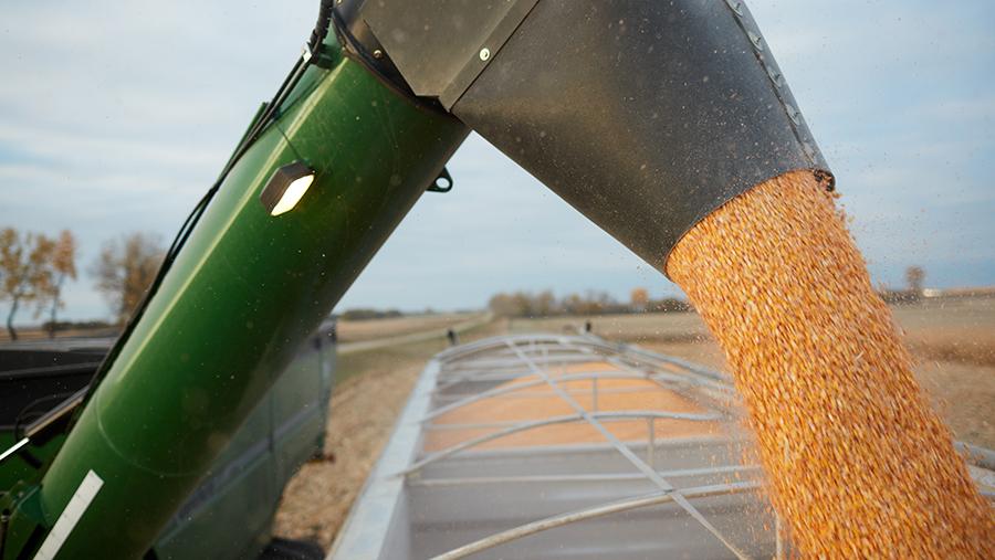 Animal feed harvest
