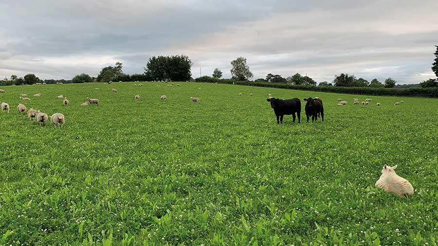 Jamie Feilden's stock grazing the GS4 mix