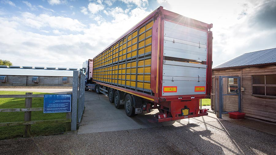 Poultry transport lorry arriving on site