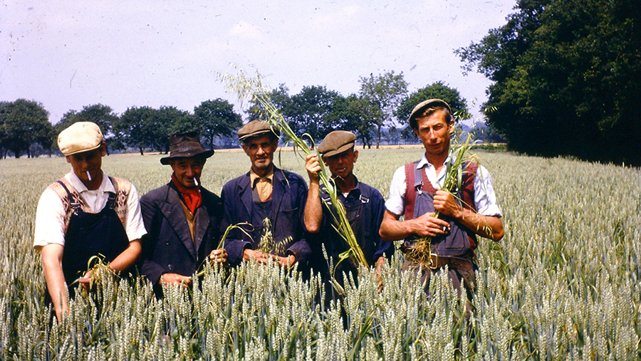 Ken, a couple of his brothers and his father, rogueing in Long Field