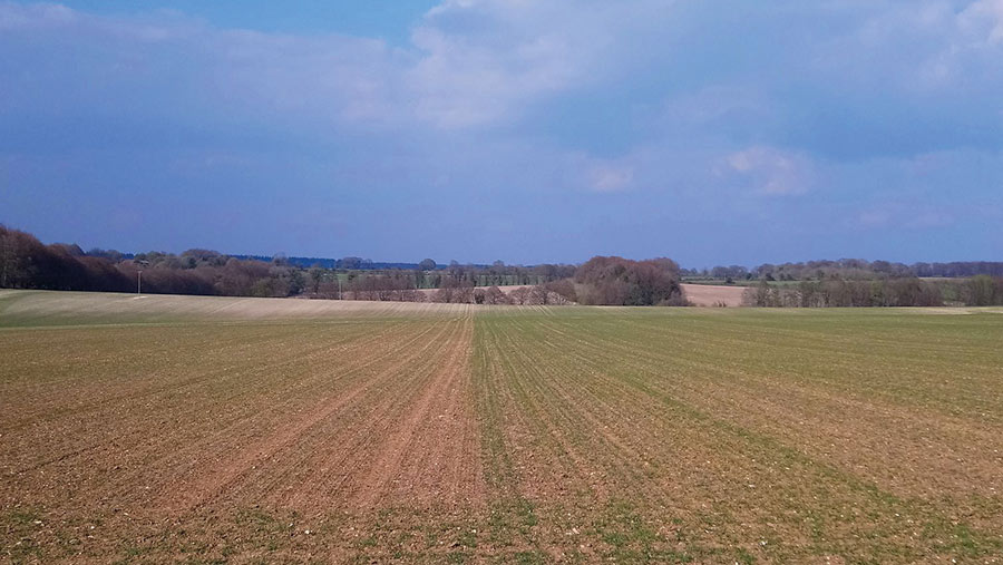 Wheat crop with bare patches