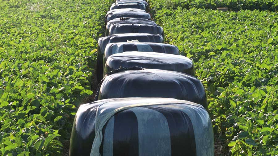 Silage bales in field