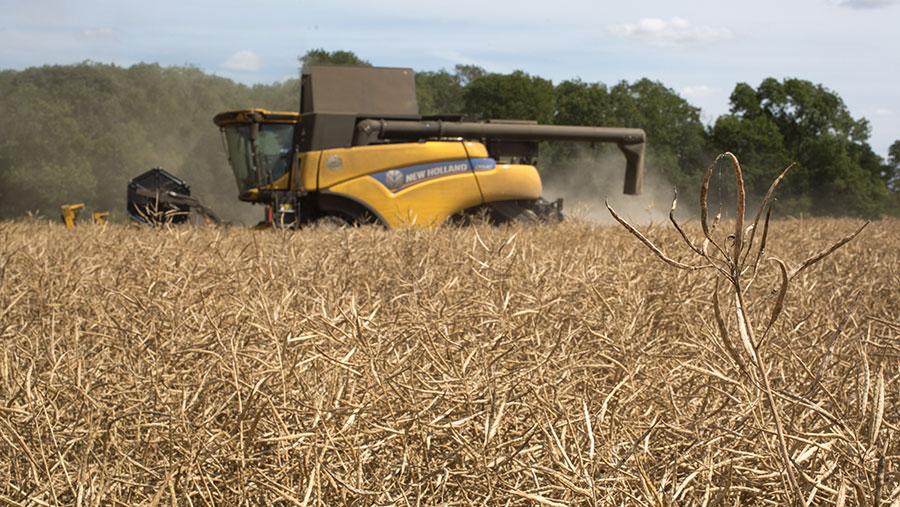 Harvesting OSR