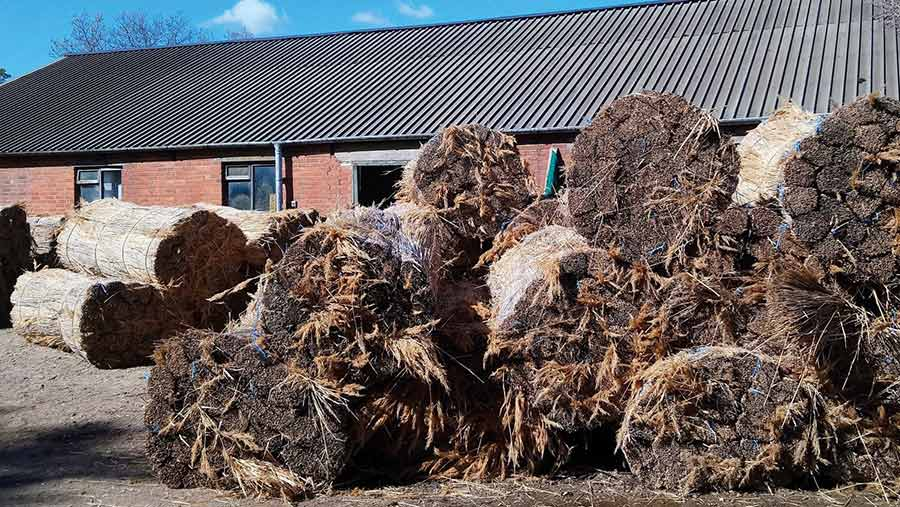 Large rolls of thatching reeds in a farm yard