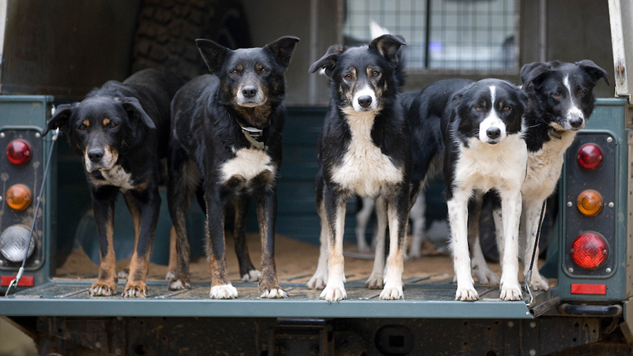 Taskforce launched to investigate reported rise in pet theft