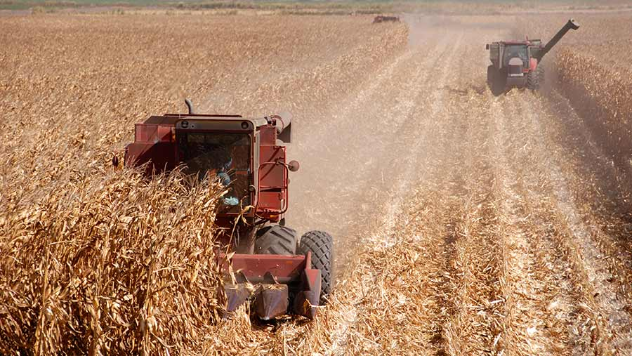 The critical weeks for the US maize crop are just beginning © Adobe Stock
