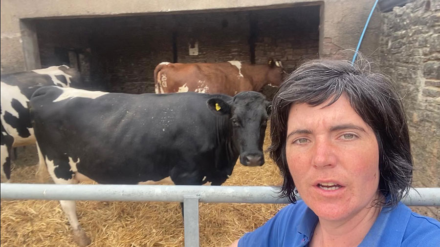 Abi Reader with the three pregnant cows
