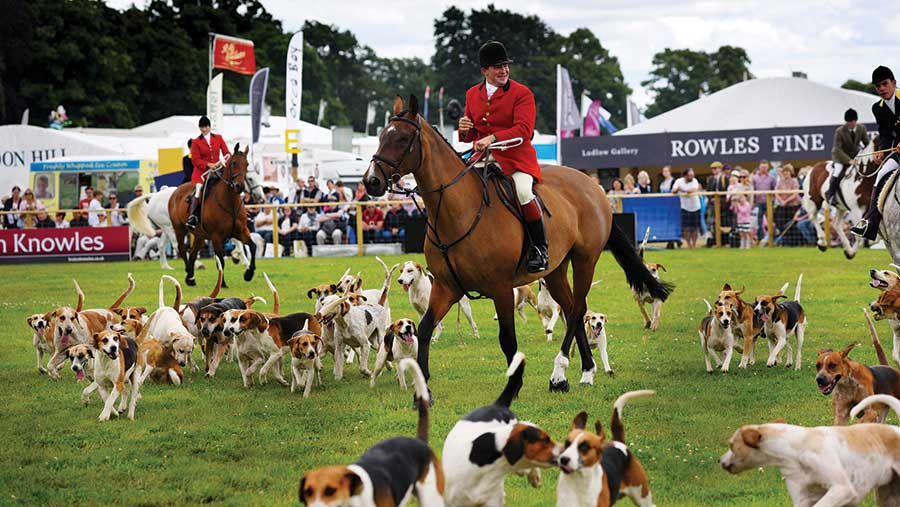 Horse, rider and hounds at Game Fair