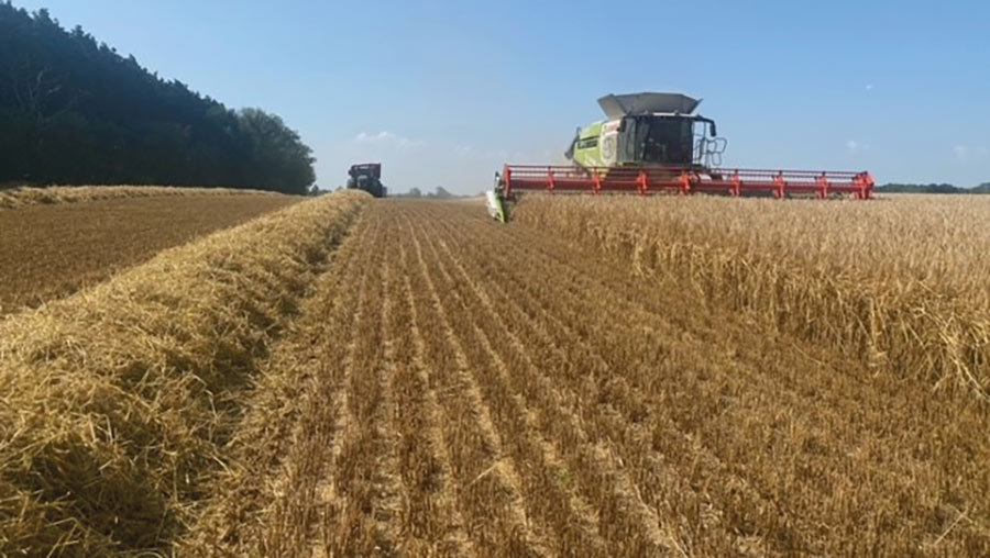 Long view of combine and strip of harvested field