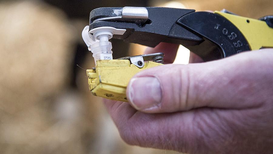 The Elisa test can throw up false negatives around calving © Steffan Hill