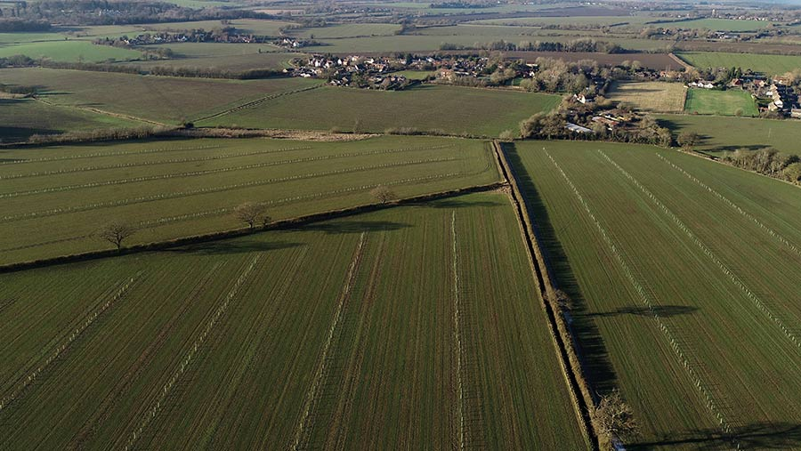 Aerial view of agroforestry on Shimpling Park Farm