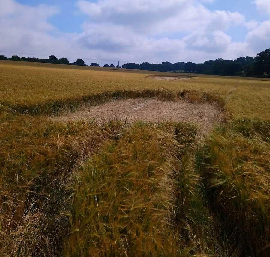 Rectangular bare patch in a barley crop