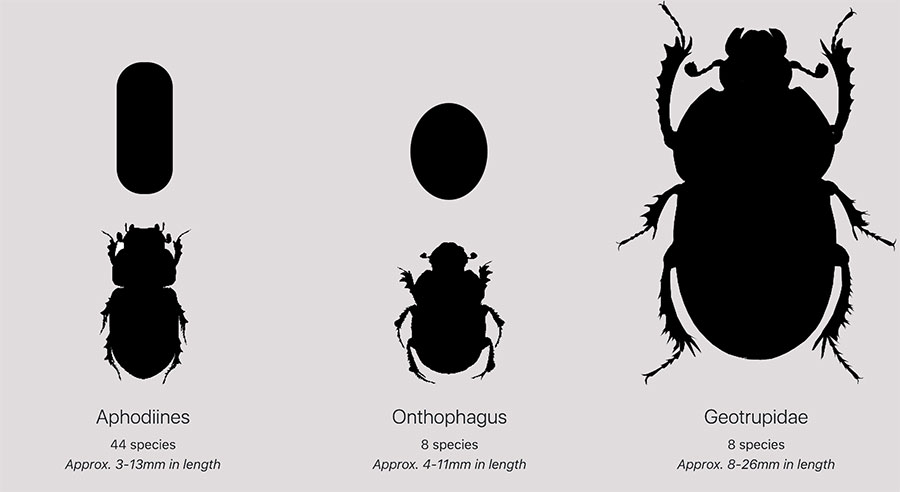 Dung beetle types