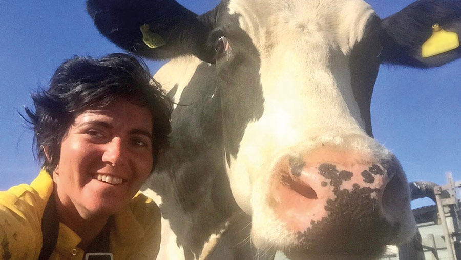Abi Reader and dairy cow
