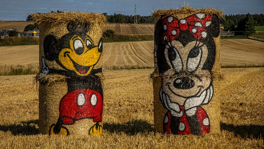 Mickey and Minnie Mouse painted hay bales