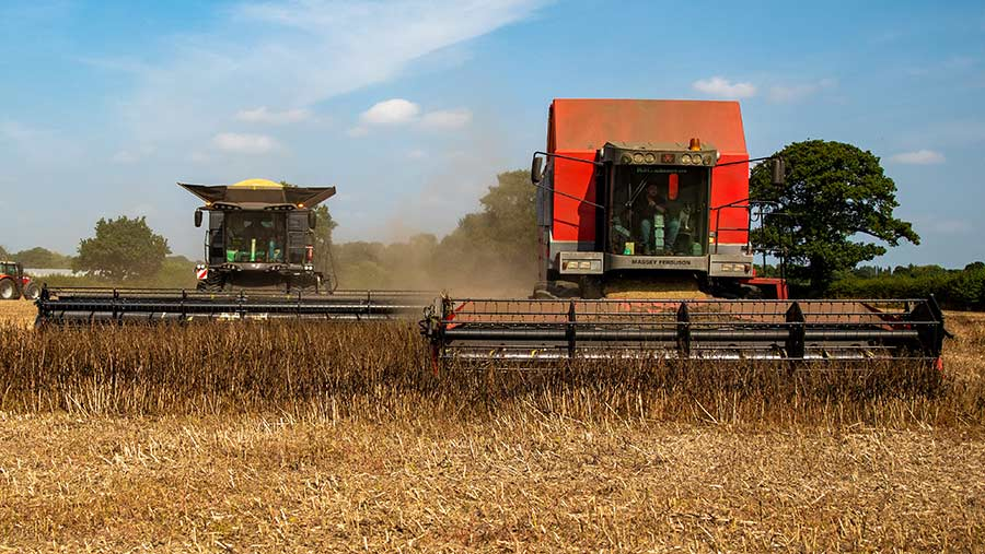 Last day of harvest at Brewster Farms, Staffordshire, with two Massey combines cutting beans (supplied by Rachael Lea)