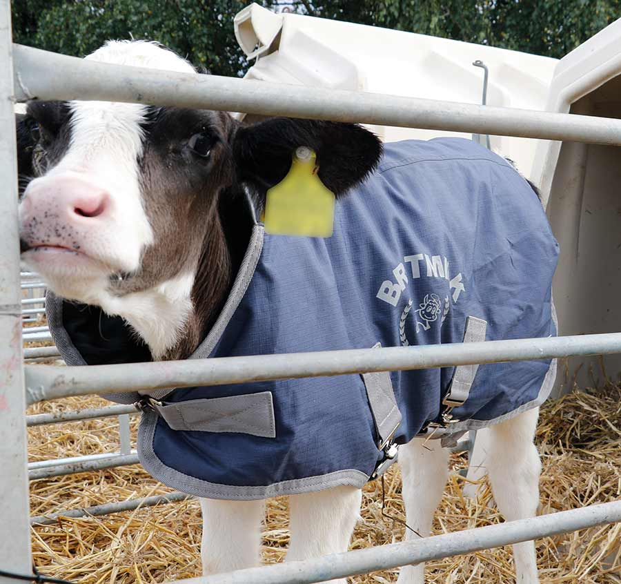 Britmilk calf coat