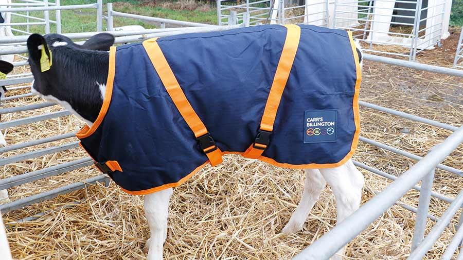 Carrs Billington calf coat