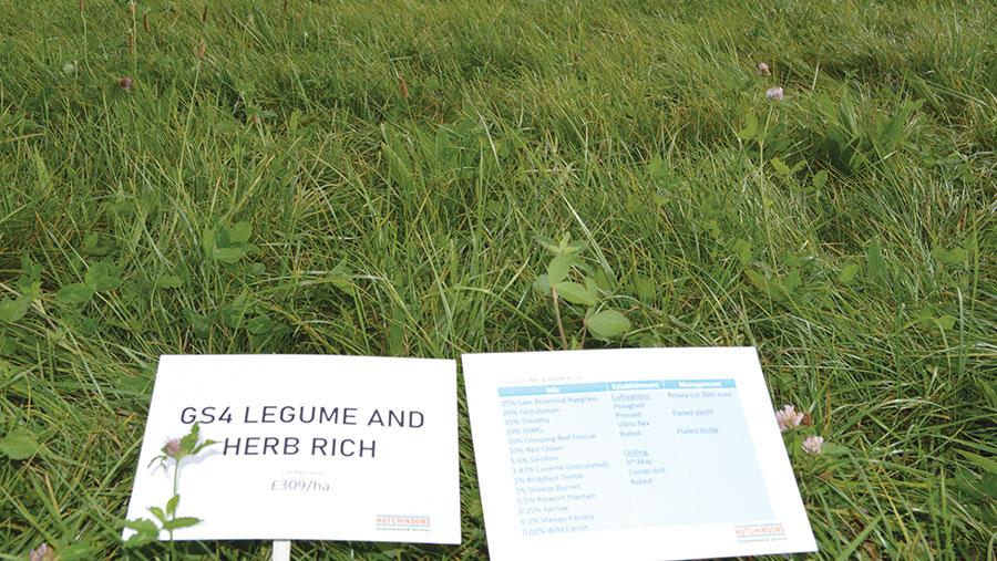 Hierbas ricas en leguminosas y hierbas