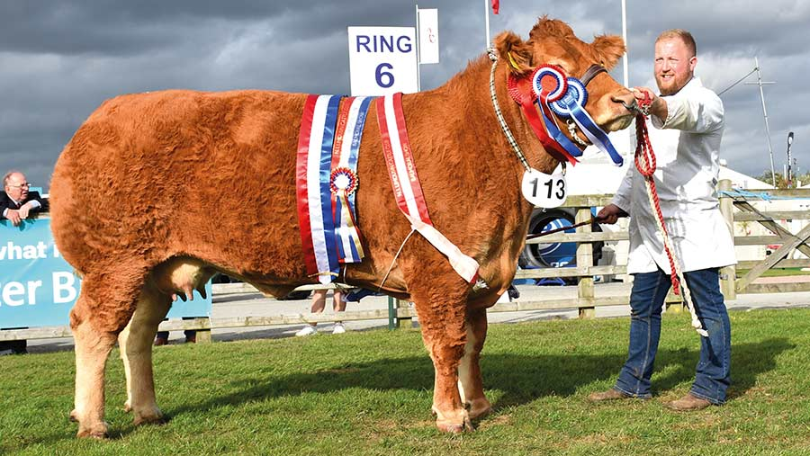 Beef reserve interbreed champion Jalex Mya
