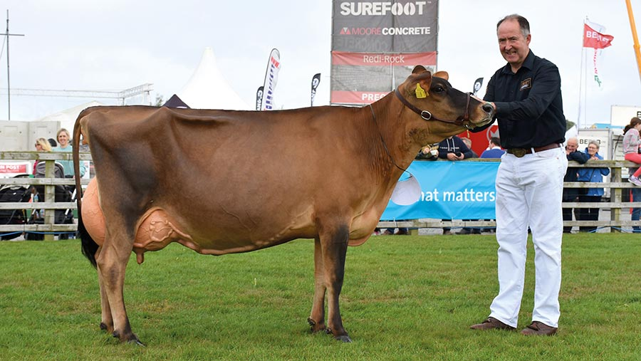 Dairy interbreed champion Potterswalls Excitation Glamour