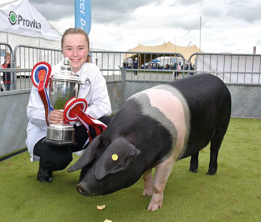 Pig interbreed reserve Prestcombe Lady 2