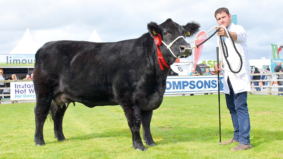 Beef interbreed champion Woodvale Miss Annie