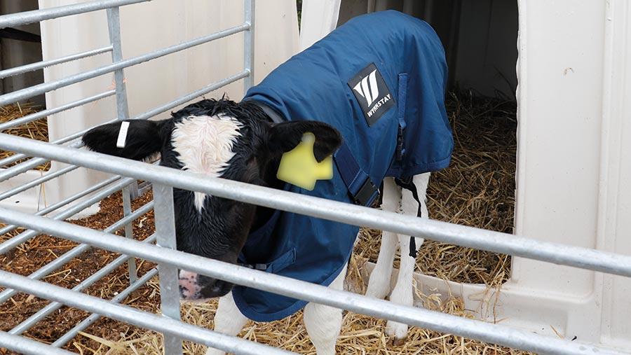 Wynnstay calf coat