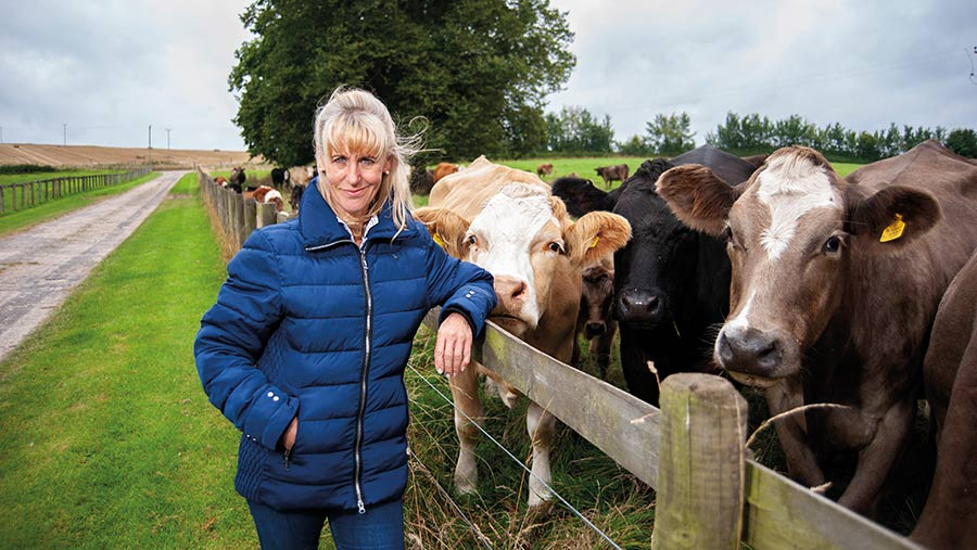Minette Batters with beef cows