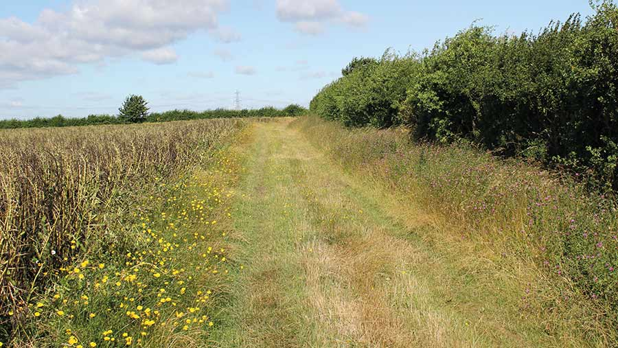 Field margin with a hedgerow and grassy track