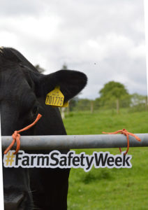 A Farm Safety Week poster showing a cows at a gate