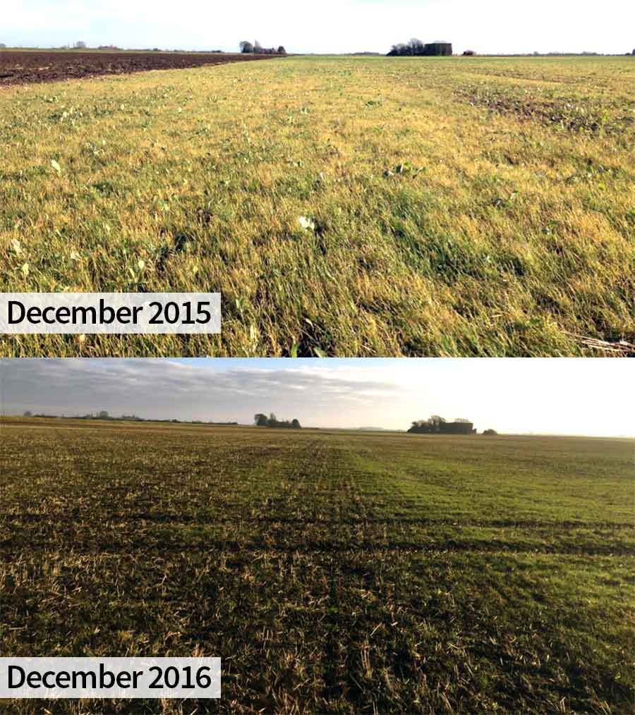 The trial field on it's third blackgrass flush in 2015 (top), compared with one year later (bottom) after spring cropping