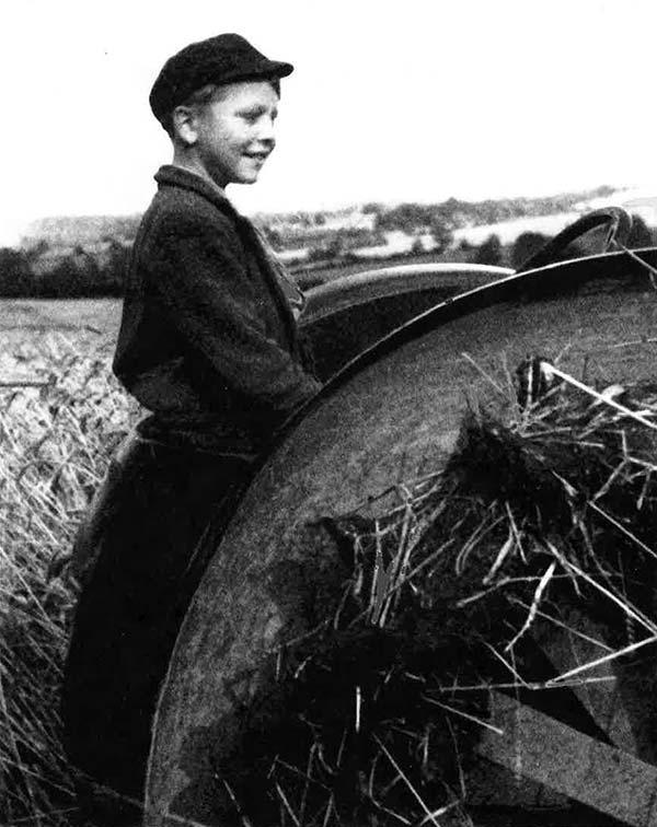 Donald Ward cutting wheat